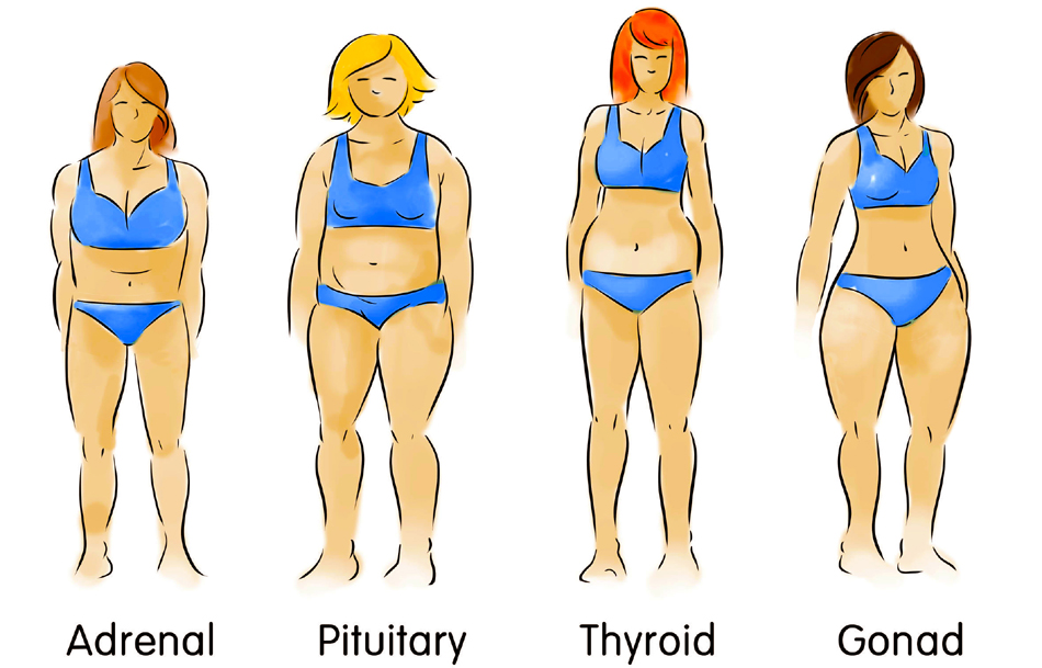 drawing of the 4 body types, adrenal, pituitary, pear or gonad, and thyroid, to answer what is my body type