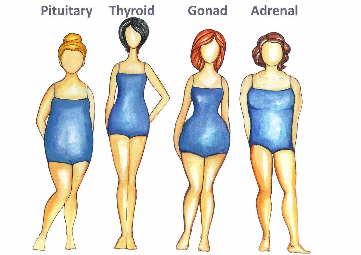 pic of the 4 body types including thyroid, the skinny body type
