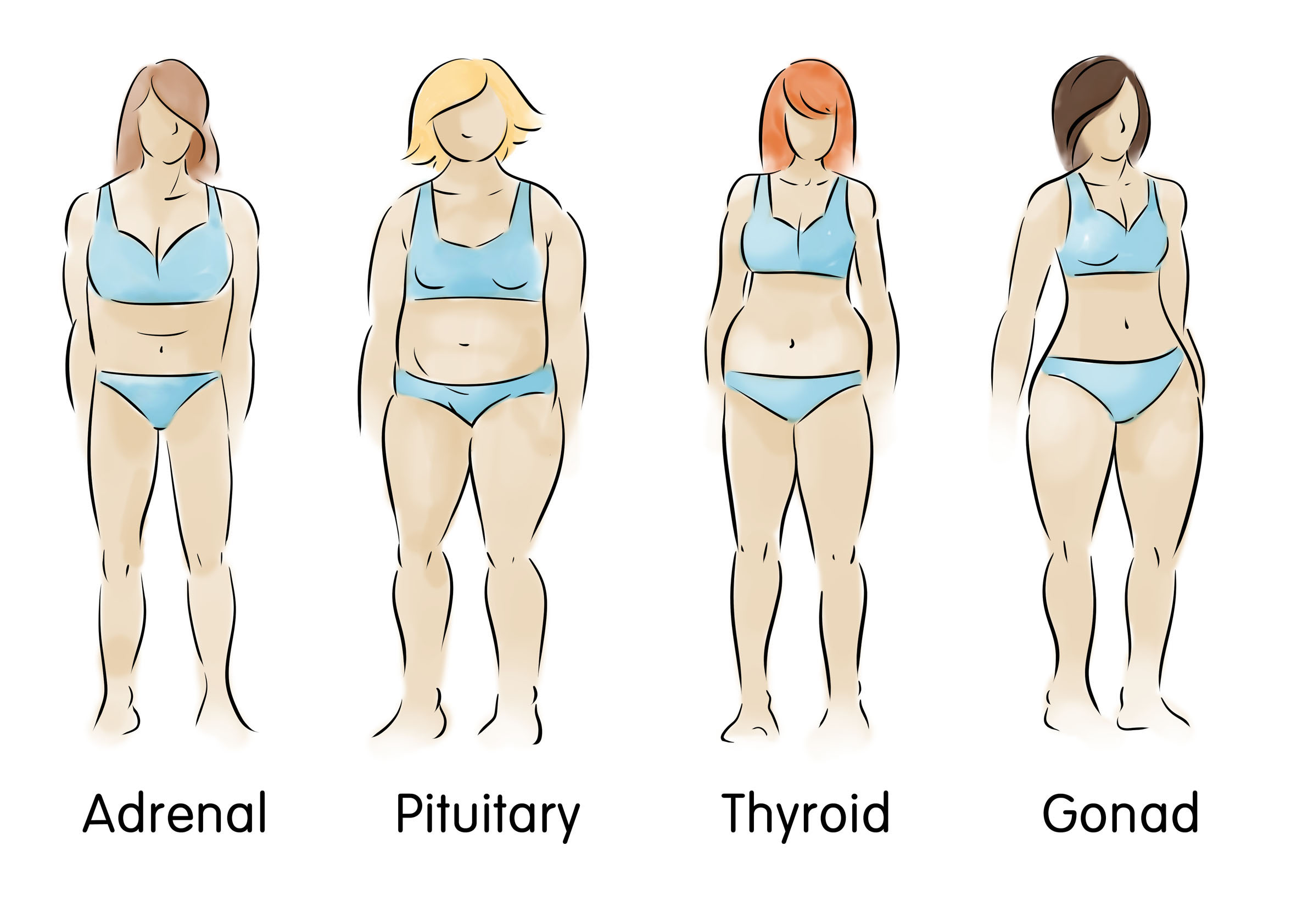 a pic of the 4 body types as not eating right for your body type is one of the weight gain causes